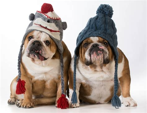 winter puppy how to keep your pets healthy and happy the cooler months jetpets
