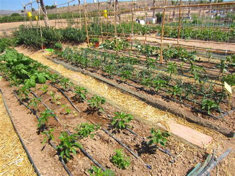 Drip Irrigation Systems For Vegetable Gardens How To Plan A Drip Irrigation System Ebay