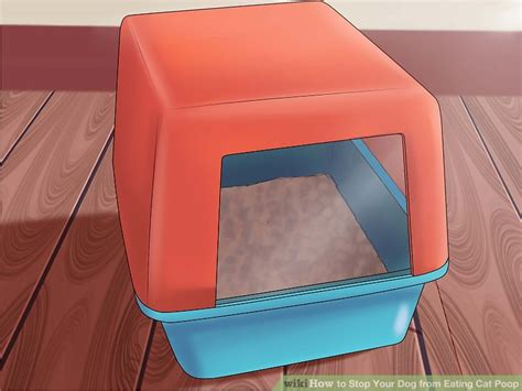 how to keep out of cat litter best litter box to keep dogs out box designer catbox litter box enclosure how to