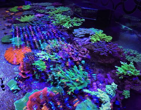 reef with lights aquarium led lighting photos reef and planted aquarium