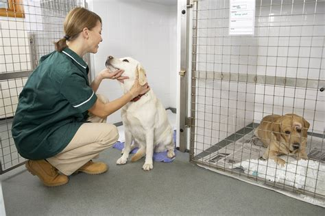 vaginitis in dogs discharge in dogs symptoms causes diagnosis treatment recovery