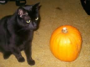 cat and pumpkin cat and pumpkin cats picture