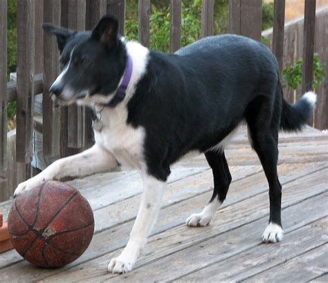 Cool New Electronics Of Dogs Playing Basketball Can Your Dog Do That