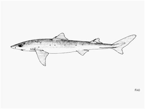 charter boat wolf rock fish identification