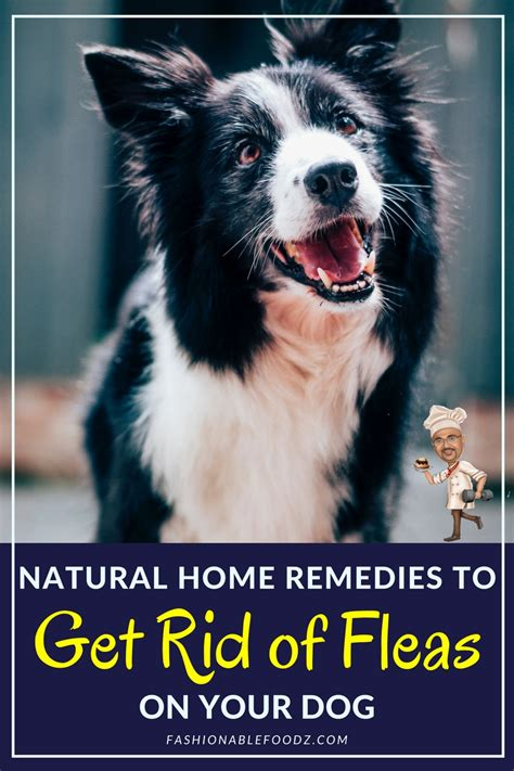 home remedies to get rid of fleas on your