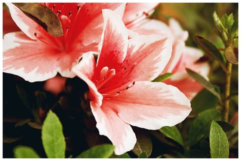 nomi di fiori nomi di fiori stratfordseattle