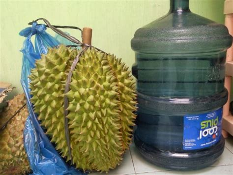 Harga Bibit Durian Bawor Asli jual bibit durian bhineka bawor asli 40 60 cm bibitbunga