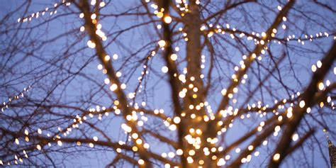 trees and lights lights should you hang them on your trees and