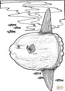 sunfish coloring page ocean sunfish coloring page free printable coloring pages