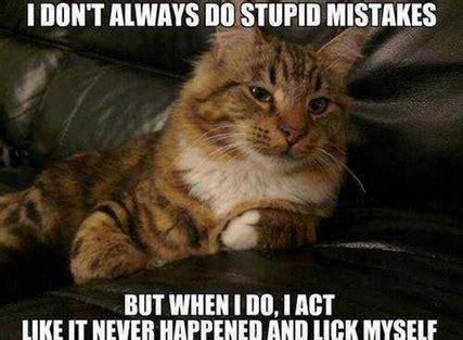 Best Cat Memes - 30 powerfully true and hysterical cat memes purrtacular