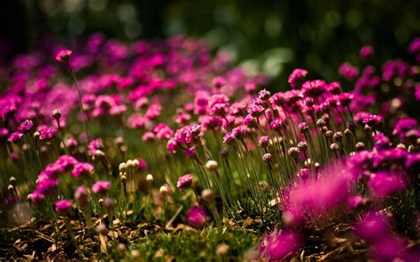 wallpaper with flowers gorgeous pink flowers wallpaper 871 1920 x 1200