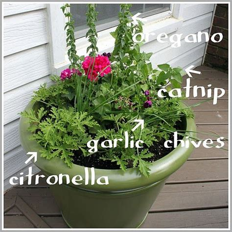 plants that keep away mosquitoes 71 best landscaping images on pinterest gardening