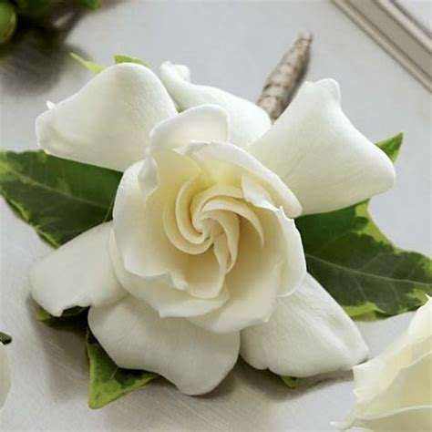 Gardenia Boutonniere at Send Flowers