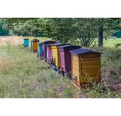 Free Images  Farm Meadow Shed Honey Transport Shack