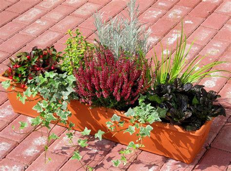 blumen f rs fensterbrett bepflanzter balkonkasten 80 cm wintergr 252 n balkon