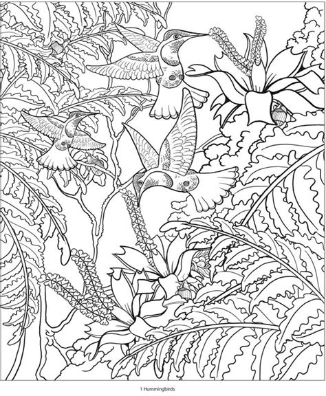 coloring pages for adults hummingbird 74 best humming birds art coloring images on pinterest