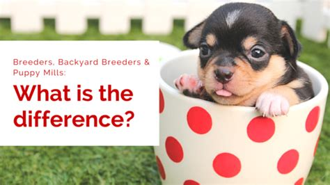what is backyard breeding the perfect outdoor space for your pet my kid has paws
