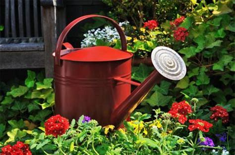 Watering: Too much of a good thing? ? Easy To Grow Bulbs