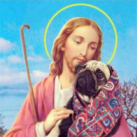 jesus pug even jesus pugs