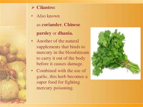 Dried Cilantro Mercury Detox by Herbs And Cure To Toxins