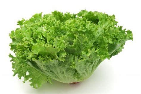 imagenes lechugas verdes lechugas cocinaryo