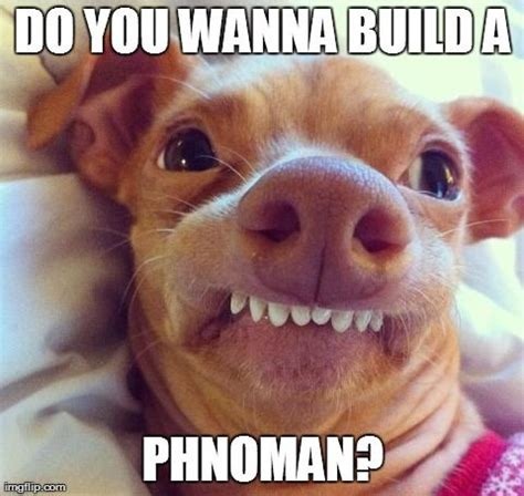 Tuna Meme - pics for gt tuna the dog meme phteven