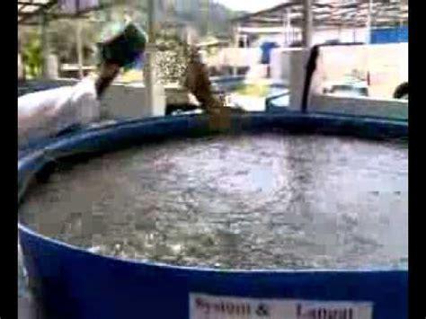 Ton Nasa Lele sistem wadah minimal untuk perbesaran ikan lele