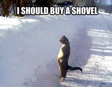 Shovel Meme - funniest memes ever pictures of all time funny website