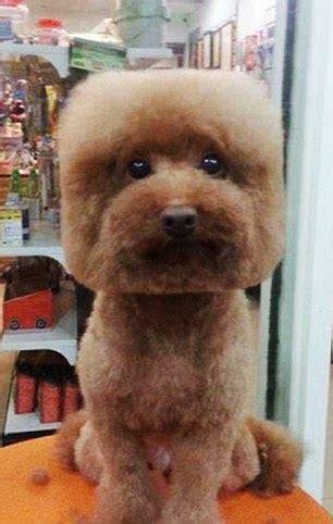 goldendoodle puppy vs an cube les chiens cubiques la nouvelle mode improbable 224 ta 239 wan