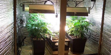 build  budget friendly cannabis grow room bonza blog