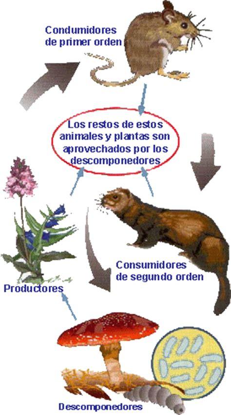 cadenas alimentarias ejemplos para niños 191 qu 233 es la cadena alimenticia o cadena tr 243 fica