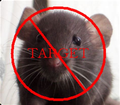 membuat perangkap tikus alami tumbuhan pengusir tikus alami aneka tips mengusir tikus