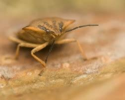 how do you know when you have bed bugs bed bugs archives getridpests