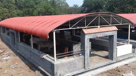 Do Cows Shed by Save A Cow Project 187 Sadhu Vaswani Mission Pune India