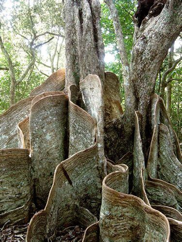 Trees From Around The World by Trees From Around The World Eye