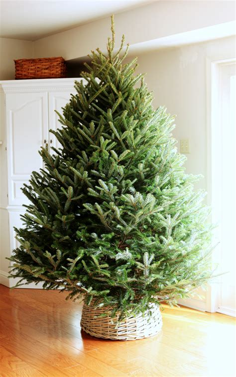 inexpensive home decorations 26 inexpensive tree decoration ideas