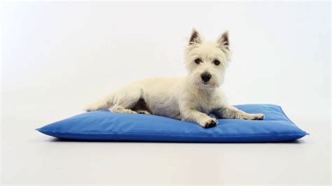 cool bed iii kh manufacturing cool bed iii cooling dog bed large inch
