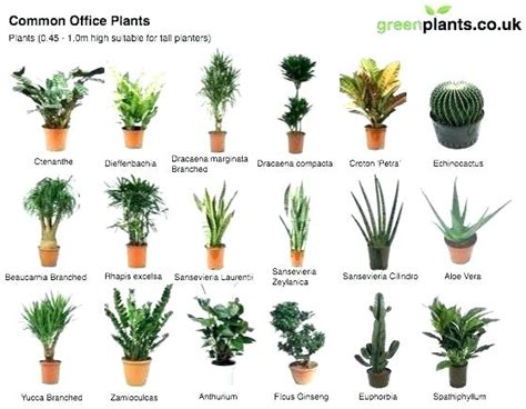 indoor plant images with names house plants pictures and names common indoor marvelous images tropical p upcms co