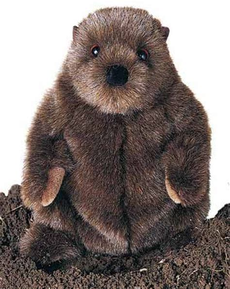 groundhog day german groundhog day a german tradition yes it is