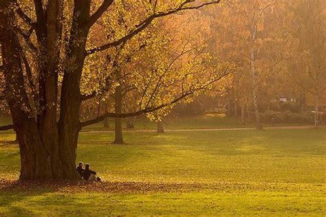 alberi per giardini alberi per giardino alberi come scegliere gli alberi