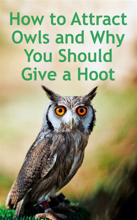 how to attract owls to your backyard how to attract owls and why you should give a hoot