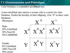 7 1 chromosomes and phenotype autosomal genetic disorders