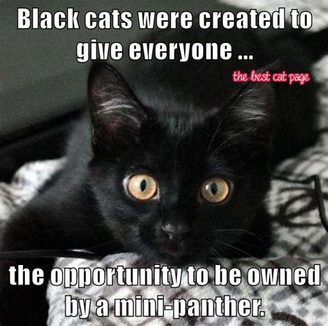 Black Cat Memes - appreciate the black cat