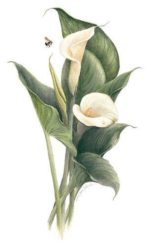jane pelland american society of botanical artists
