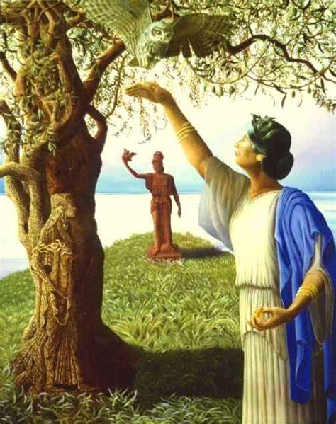 athena s athenas olive tree www pixshark com images galleries