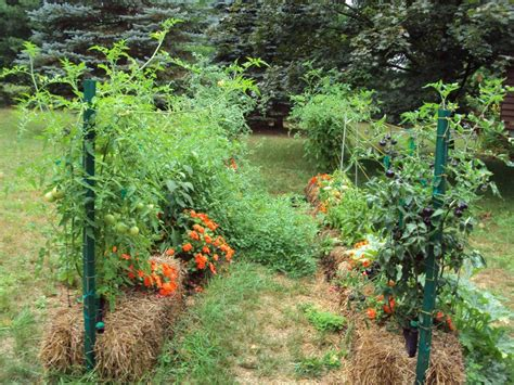 How To Build Trellis straw bales are a new and effective way to garden