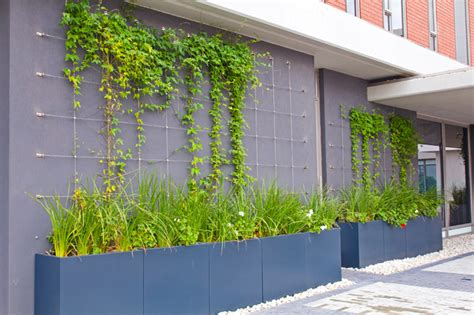 Green Wall Trellis green wall trellises contemporary other metro by tensile cables