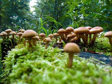 Braune Pilze Im Garten Essbar by Tipp September 2014