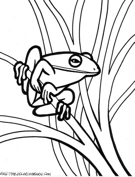coloring pictures of tree frogs tree frog outline clipart panda free clipart images
