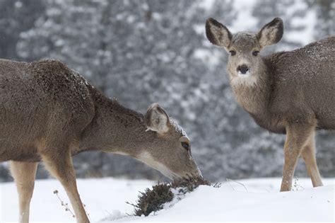 bettdecke für sommer und winter tiere im winterwald lingo das mit mach web